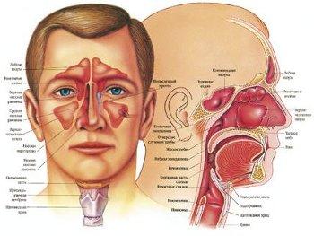 Заболевания носа: симптомы, признаки, лечение